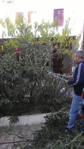 Turgutreis Bahçe Budama